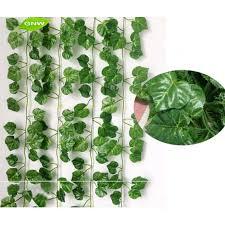 indoor vine plant indoor ornamental plants boxbrownie co