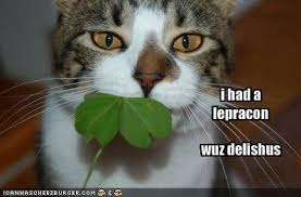 Funny St Patricks Day Meme - 10 funny st patrick s day memes to make you laugh on this irish