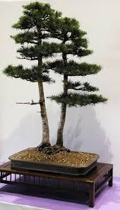 2123 best bonsai images on pinterest bonsai trees plants and