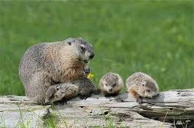 groundhog u2014 lennections