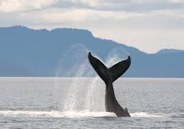 Verizon Coverage Map Alaska by Amenities In Juneau Alaska Juneau Whale Watching Tours And