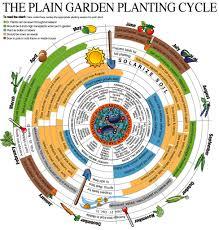 permaculture garden layout gardening