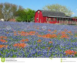 Texas Hill Country Map Wildflowers And Red House Stock Photo Image 35163380