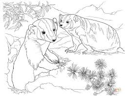 american badgers garden coloring free printable coloring