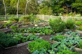 Backyard Vegetable Gardening by Small Vegetable Gardening How To Start A Business Of Vegetable