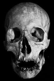 Human Anatomy Skull Bones Pin By Rogerio De Medeiros Lobo On Crânios Pinterest