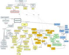 nervous system concept map nervous system concept map search biology