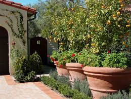 backyard lemon tree home decorating interior design bath
