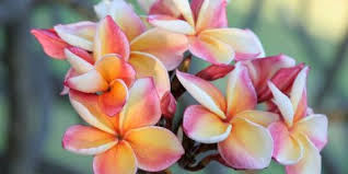 Hawaii Plants 5 Hawaiian Plants To Instantly Beautify Your Garden South Maui