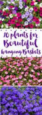 Best Flowers For Small Pots The 25 Best Flowers For Garden Ideas On Pinterest