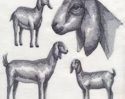 Goat Decor Nubian Goat Etsy