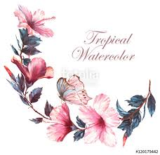 watercolor floral illustration of the tender white