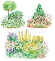 Types Of Garden Flowers - watercolors hand painted pictures of garden design and three types