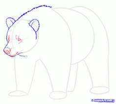 easy bear drawing draw grizzly bears step step forest