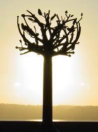 file freedom tree st helier geograph ci 150 jpg wikimedia
