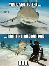 Shark Attack Meme - what can the funniest shark memes on the internetz teach us about
