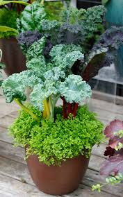 cool colorful container gardens for chilly weather swansons