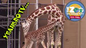yeahbrotv at the oklahoma city zoo adventues half the okc zoo baby