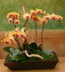 Flower San Jose - susan h u0027s flowers florists 1711 meridian ave san jose ca