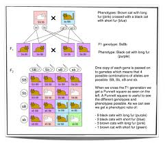 Dihybrid Crosses Worksheet Ninth Grade Lesson Dihybrid Crosses Are The