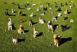 Que Perros muerden mas?