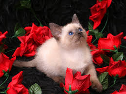 Pictures Of Beautiful Flowers In The World - top most beautiful flowers in the world professional tips for