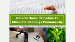 natural bed bug remedies natural remedies to eliminate bed bugs permanently youtube