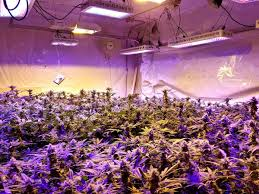 best led grow lights for marijuana should you have an indoor grow gevaaalik com