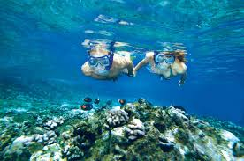 Nevada Snorkeling images Molokini and turtle arches snorkeling trip 2018 maui jpg