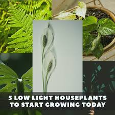 Low Light Indoor Plants by 5 Low Light House Plants To Start Growing Today The Indoor Gardens