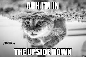 the upside down funny cat meme binxzay