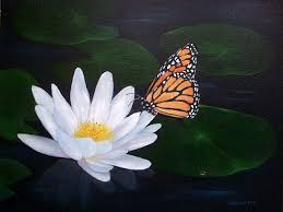 butterfly from lotus flower search
