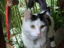 39 best our cats images on pinterest html cats and alternative