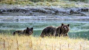 interior department twitter ban unofficial national parks account mocks trump cnn travel