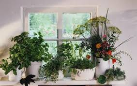 Easy Herbs To Grow Inside How To Grow Herbs Indoors On A Sunny Windowsill