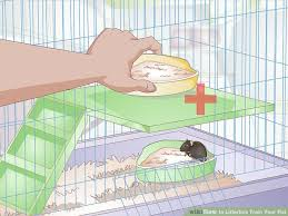 Best Bedding For Rats How To Litterbox Train Your Rat 11 Steps With Pictures