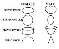 Anatomy Difference Between Male And Female 63 Jpg