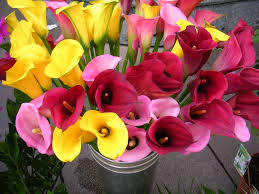 Flower Seeds Online - flower bulbs online india buy seeds online india terrace