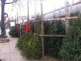 where to buy christmas trees in lower merion and narberth