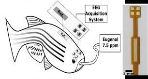 multichannel eeg recordings enable precise brain wave measurement