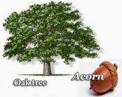 acorn urdu meaning to urdu dictionary