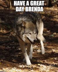 Insanity Wolf Meme - meme generator baby insanity wolf generator best of the funny meme