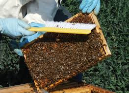 beekeeping for beginners melbourne