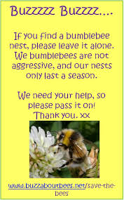 get rid of bees free advice