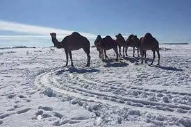 bizarre biggest snowfall in living memory hits sahara desert