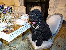 Dogs At Dinner Table President Obama U0027s Dog Sunny Presidential Pet Museum
