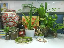 office plant garden chronicles indoor plants for the office desk top