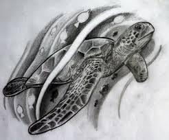 sea turtle sketch thinkthank fotolog