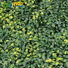 aliexpress com buy uland plastic leaves plants panels artificial