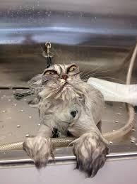 Bubble Bath Meme - dog plans the end of the human race after the bubble bath